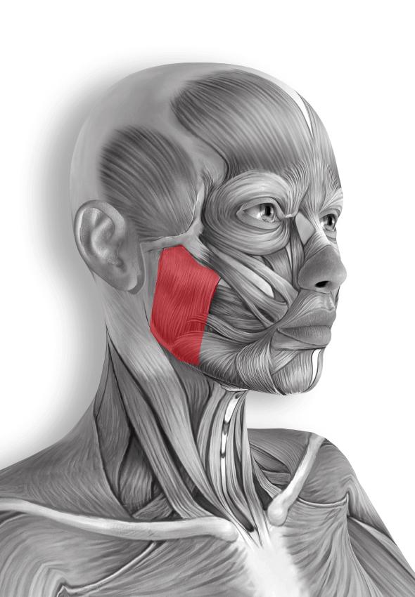 sval-zuvaci-tvarova-joga
